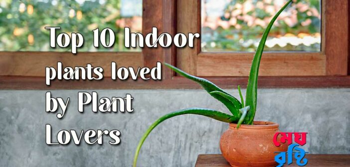 Top 10 Indoor plants loved by Plant Lovers   Suparna Ghosh